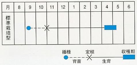 たまねぎ 種 ソユーズ(8ml)