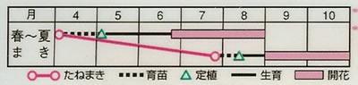 百日草 F1サンシャイン混合(2ml) 〜花のタネ〜