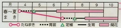 百日草 F1スィズル混合(20粒) 〜花のタネ〜