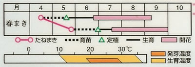 松葉牡丹 終日咲混合(0.3ml) 〜花のタネ〜