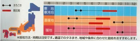 トルコギキョウ バイカラーミックス (0.2ml)