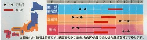 トルコギキョウ ダブルミックス (0.2ml)