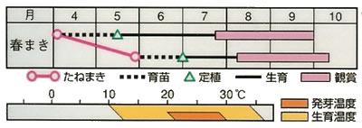 観賞用とうがらし 五色 旭光(1ml) 〜花のタネ〜