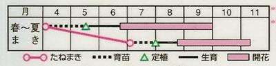 百日草 中輪咲混合(2.5ml) 〜花のタネ〜