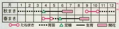 アスター 八重咲混合(1.2ml) 〜花のタネ〜