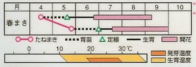 松葉牡丹 八重咲混合(0.2ml) 〜花のタネ〜
