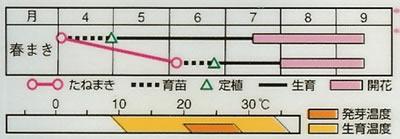 朝顔 曜白混合(1ml) 〜花のタネ〜