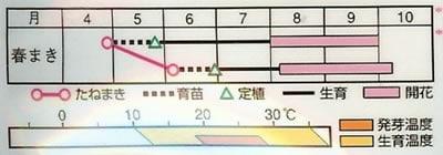 夕顔 白花(4ml)〜花のタネ〜