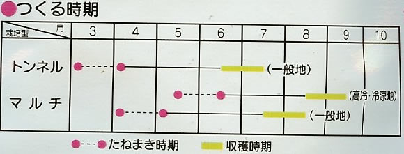 スイートコーン種 ゆめのコーン85(20ml)〜サカタ交配〜