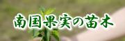 南国果実の苗木