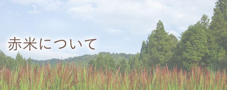 赤米について