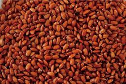 私たちが育てた赤米