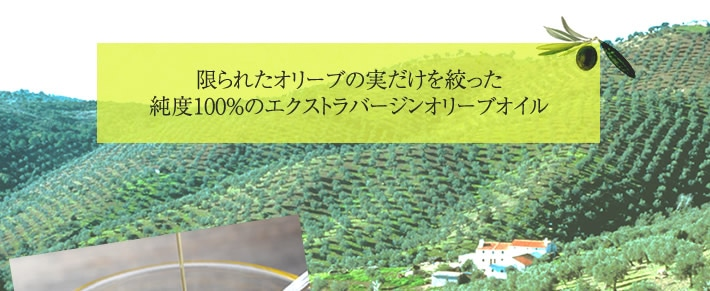 限られたオリーブの実だけを絞った純度100%のエクストラバージンオリーブオイル