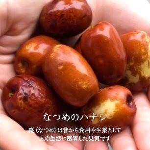 なつめのハナシ 棗(なつめ)は昔から食用や生薬として人の生活に密着した果実です