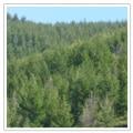 社会貢献  消火器売上の一部でCO2削減のため植林活動をしています。
