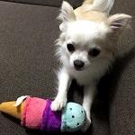 みなさまからご投稿いただいたペットのお友達をご紹介します♪★