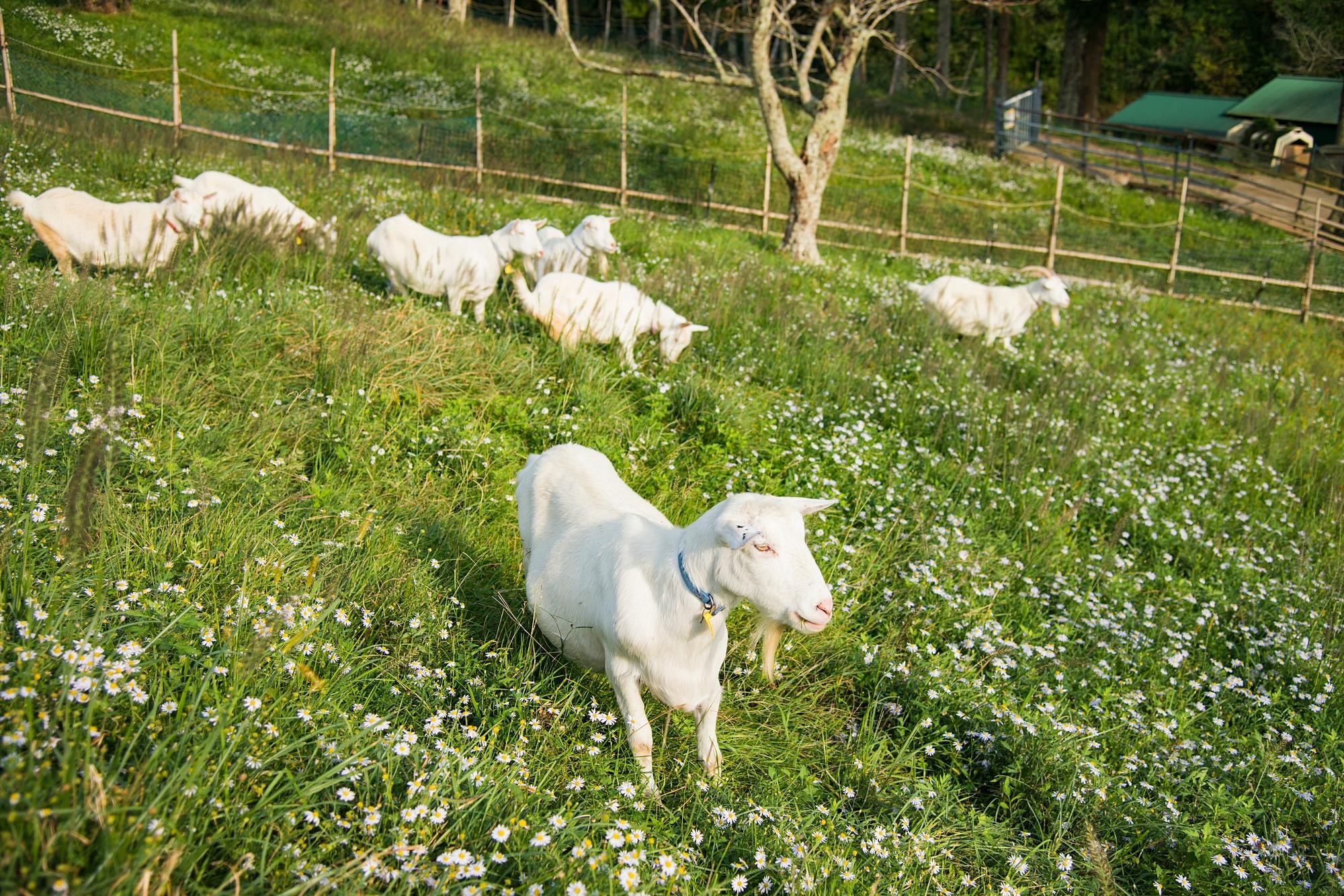 上品なイメージを演出するなら、山羊革の革ジャンを着てみよう!