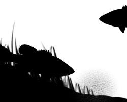木崎湖スモールマウスバス釣りエビベイト