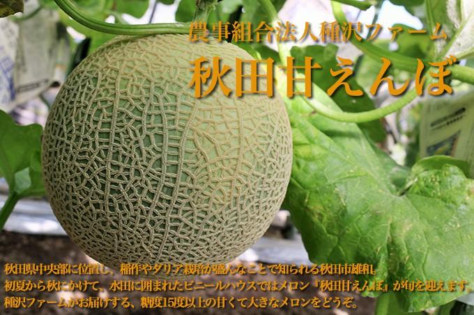 農事組合法人種沢ファーム メロン 秋田甘えんぼ