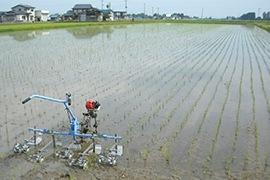 無農薬・無化学肥料のあきたこまち