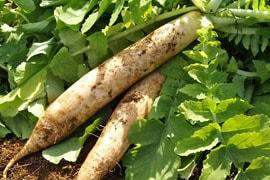 雄勝野の地が育んだ旬の野菜