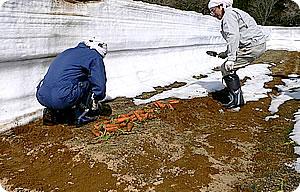 雪を割り掘り起こす