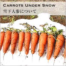 Carrots Under Snow 雪下人参について