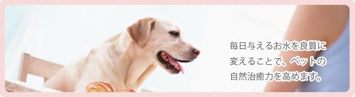 「ケイ素の恵み」犬猫(ペット)用非結晶水溶性珪素サプリメント