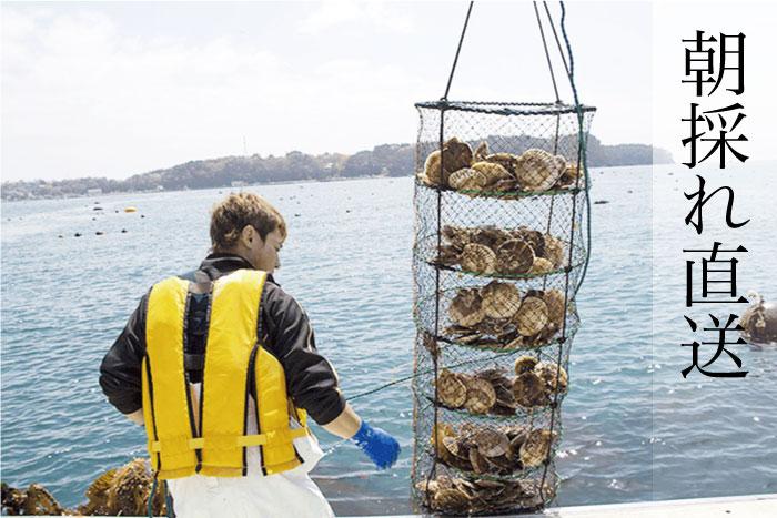 刺身でも食べられる朝採れ発送の鮮度。
