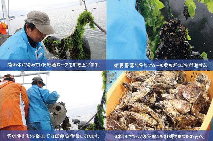 森と海が育む宮城県南三陸産の牡蠣