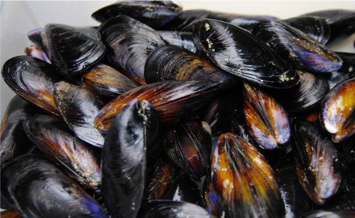 新鮮なムール貝を使用