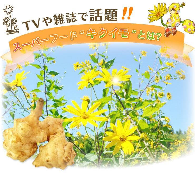 菊芋(きくいも)・キクイモとは