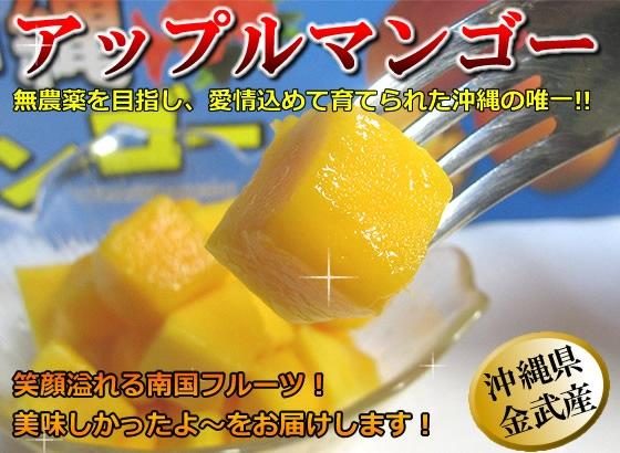 沖縄県金武産アップルマンゴー