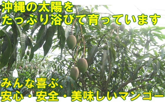 安心・安全・美味しいマンゴー