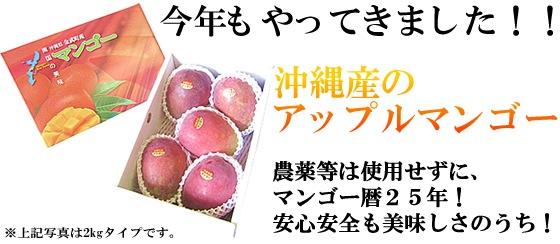 沖縄産のアップルマンゴー