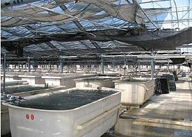 久米島養殖場2