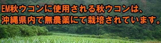 沖縄県内で栽培