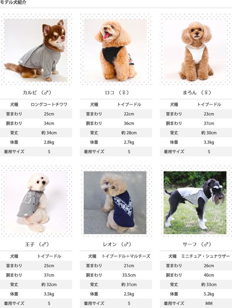 モデル犬紹介