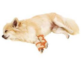 高齢犬に優しいケアの仕方