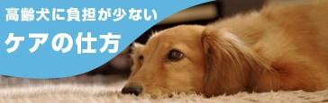 高齢犬に負担の少ないケアの仕方