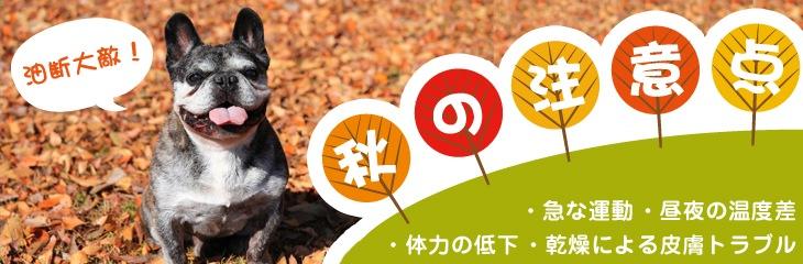 秋の注意点