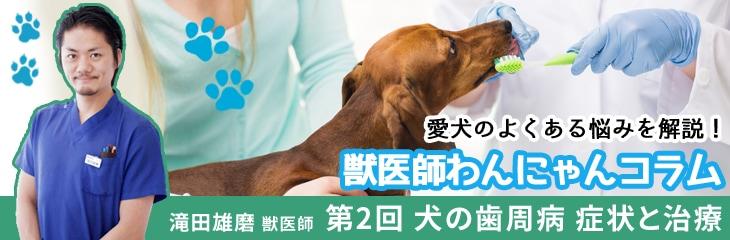 第2回 犬の歯周病 症状と治療<span style=