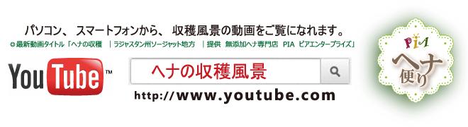 ヘナ便り | Youtubeでヘナの収穫風景がご覧になれます