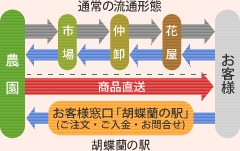 胡蝶蘭の駅の流通形態