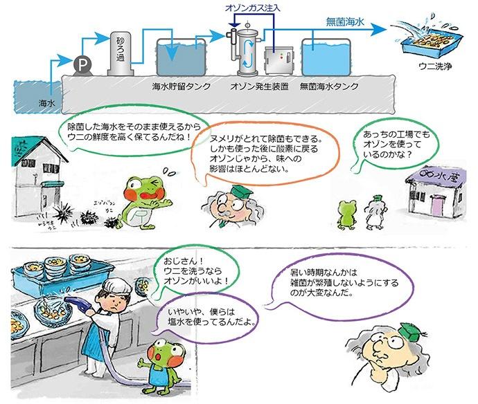 水産加工工場のうに洗浄、海水殺菌-2