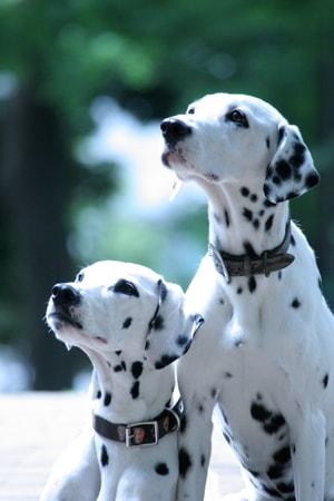 多頭飼い写真の例1、一緒に写っている写真
