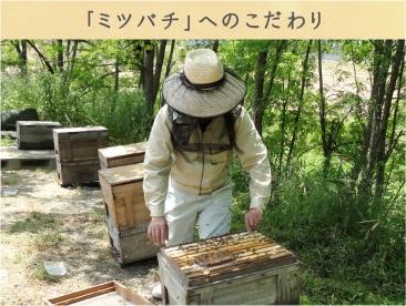 「ミツバチ」へのこだわり