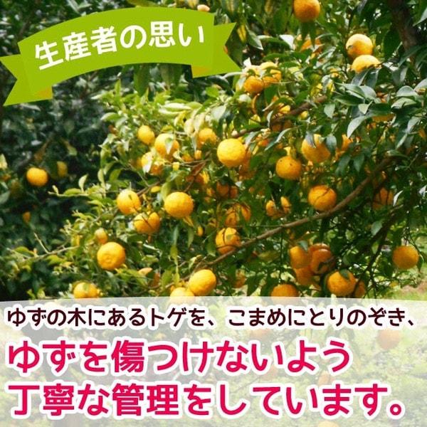 無農薬ゆず 岐阜県産 爽やかな香り 鍋料理や自家製ぽん酢、ジャムにも