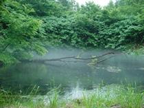 原水の時点で無菌の湧水は、地中深くのパイプを通って、外気に一度も触れることなく工場へ送水されます。