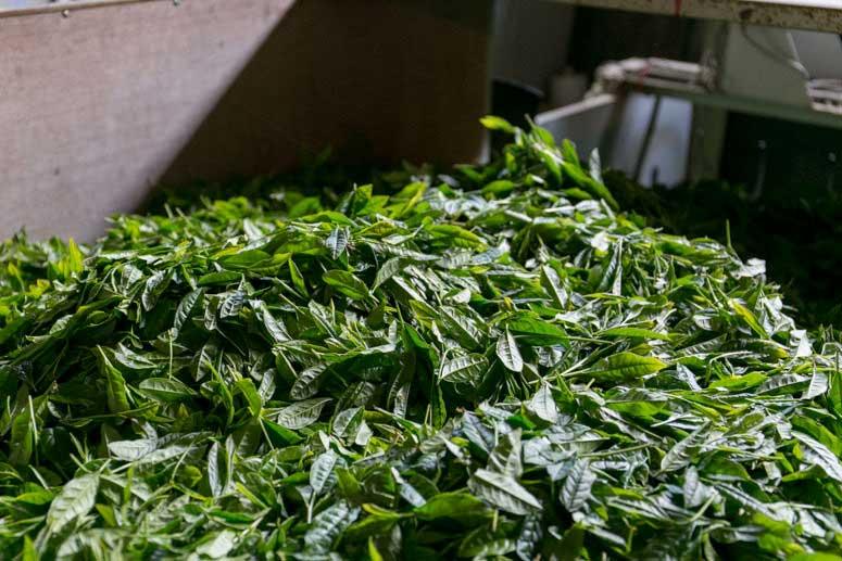 うきはの山茶 自社製茶